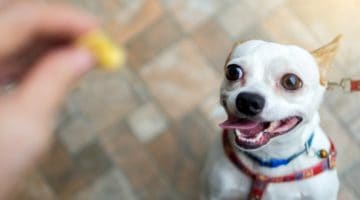 What Is the Correct Fish Oil for Dogs Dosage?