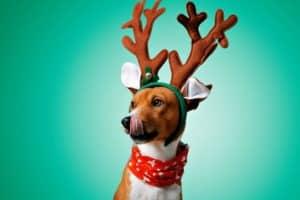 close-portrait-funny-beautiful-dog-wearing-dog christmas gifts-ss