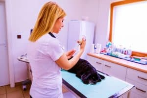 close-veterinarian-preparing-injection-dog-how to administer dog vaccinations at home-ss