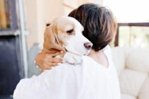 closeup-portrait-sad-beagle-dog-looking-what is positive dog training-ss