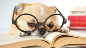 cute-dog-eyeglasses-reading-book-on-dog training books-ss-FEATURE-