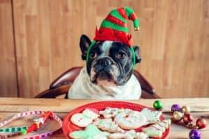 dog-christmas-elf-hat-on-table-dog christmas gifts-ss
