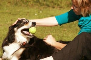 Agility Training for Dogs: Why Is This Training a Must | Should You Compete?