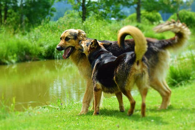 Why Dogs Need Probiotics? | Natural Probiotics for Dogs Review