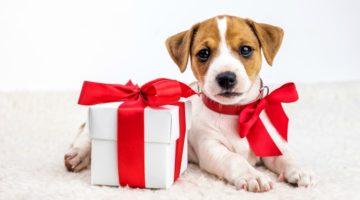 37 Dog Christmas Gifts Ideas