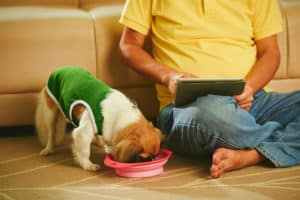 Is it Safe for Puppies? |