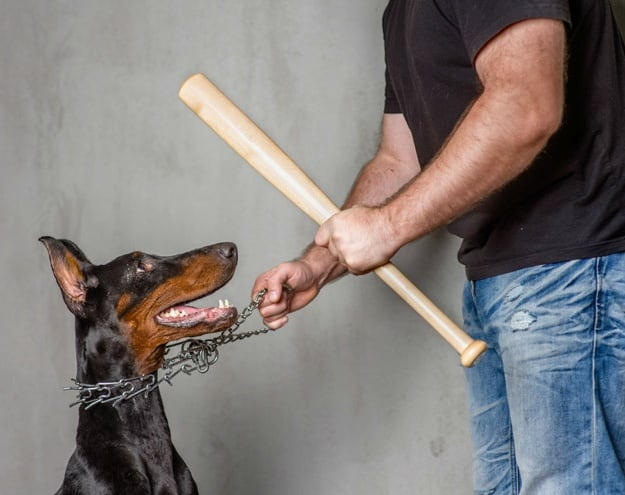 Understanding Dominance | What Is Positive Dog Training?