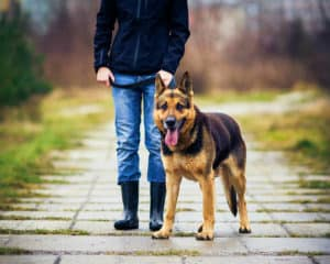Train Your Dog to Bark and Stop At Command |
