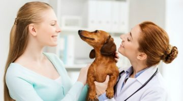 Holistic Pet Health: What Is Holistic Nutrition?