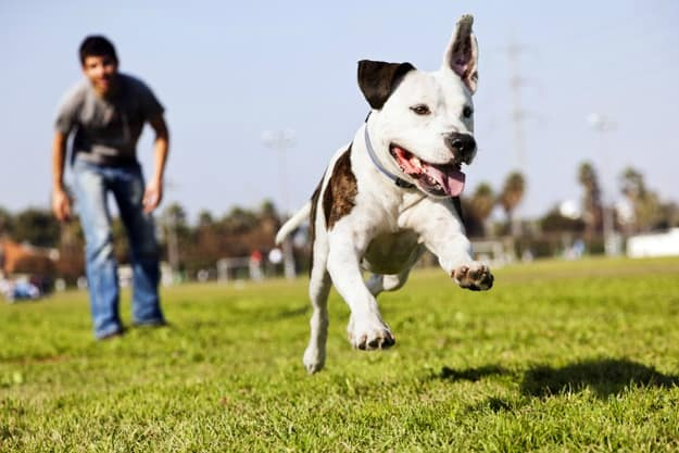 Agility Training for Dogs: Why Is This Training a Must | What Is Agility Training