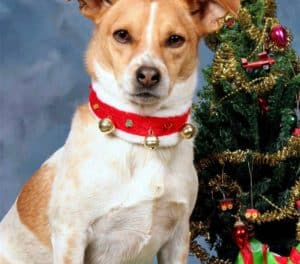 small-dog-christmas-tree-toy-dog christmas gifts-ss