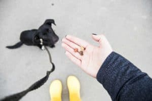 treats-dog-training-yellow-shoes-black-what is positive dog training-ss