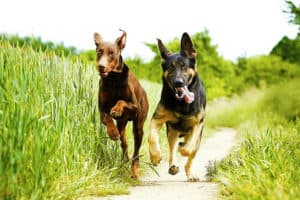 Agility Training for Dogs: Why Is This Training a Must