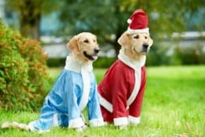 two-golden-retriever-dogs-santa-claus-dog christmas gifts-ss