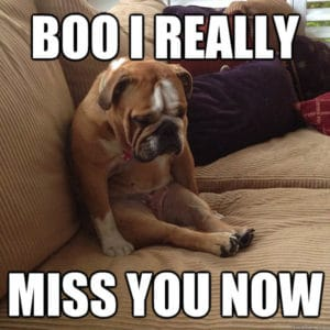 Boo, I Really Miss You Now-dog memes to cheer you up-