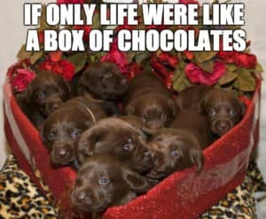 If Only Life Were Like a Box of Chocolates-dog memes to cheer you up-