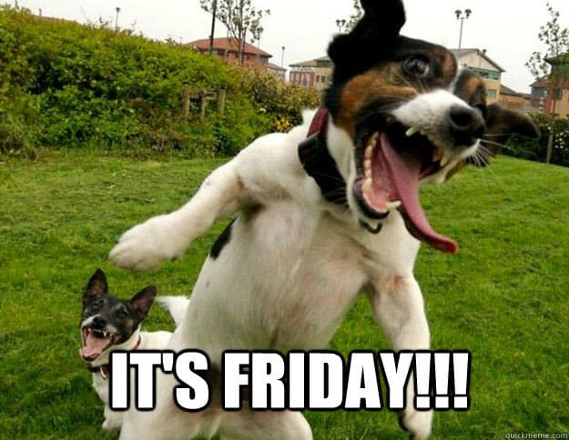 It's Friday-dog memes to cheer you up- Pet Care And Wellness