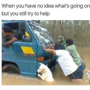 When You Have No Idea What's Going On But You Still Try to Help-dog memes to cheer you up-