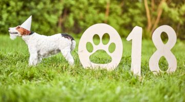 Usher In 2018 With Pet Care And Wellness