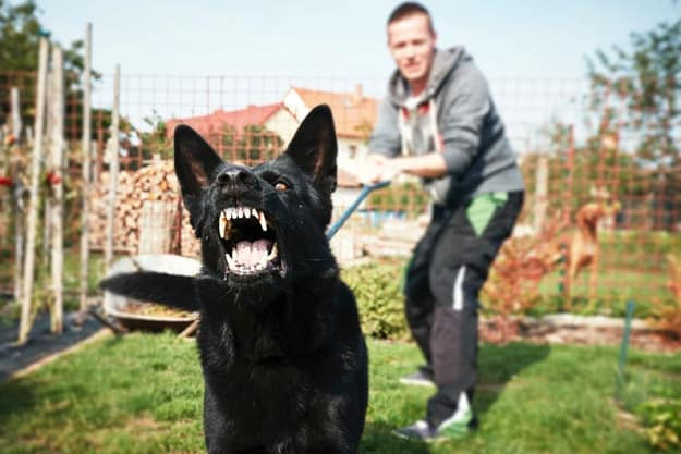 Understand what causes the aggression and avoid those situations | Dog Training for Aggressive Dogs: How to Manage Your Pet's Aggression