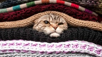 10 Winter Essentials For Your Beloved Pets