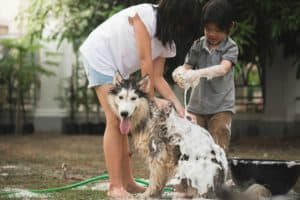 asian-children-wash-siberian-husky-dog-Dog Bathing Tips-ss