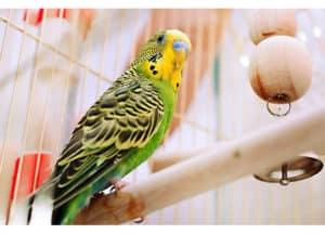 bird-inside-the-cage-winter essentials-