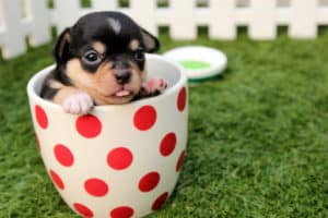 black-and-brown-short-haired-puppy-in-cup-dog health questions-px