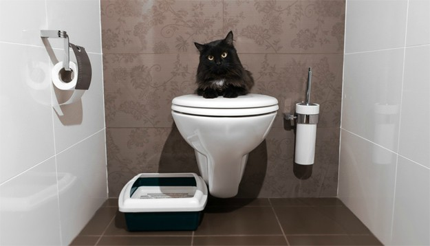 Why Should I Train My Cat to Use a Toilet? | How to Train a Cat to Use the Toilet