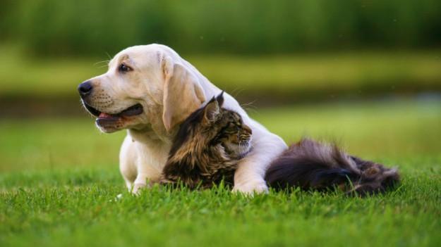 Who Needs Flea Medicine? | Is Flea Medicine for Cats Safe or Not?