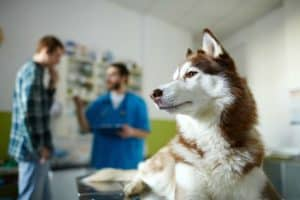 cute-buddy-vet-clinics-on-background-dog training for aggressive dogs-ss