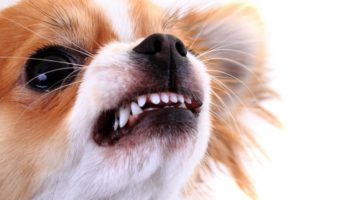 Dog Training for Aggressive Dogs: How to Manage Your Pet's Aggression