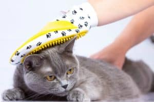 doctor-examines-cat-on-white-table-cat-grooming-tools-ss
