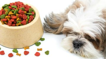 How To Feed Picky Pets | Pet Care and Wellness
