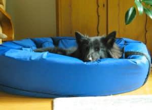 dog-bed-winter essentials-