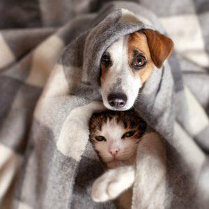 dog-cat-under-plaid-pet-warms-cold weather pet care-ss