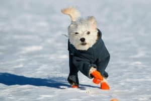 dog-in-winter-boots-winter essentials-