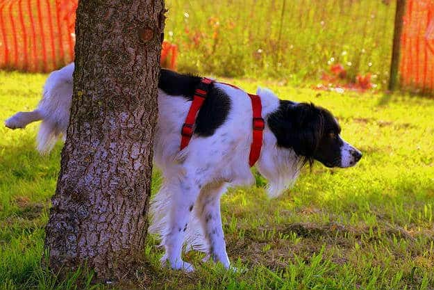 Not Being Consistent | Dog Potty Training Problems You Should Keep In Mind