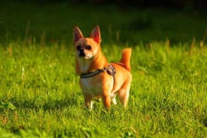 dog-playing-outdoor-dog potty training problems-