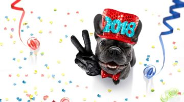 7 New Year?s Resolutions for You and Your Pet