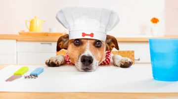 9 Healthy Homemade Dog Food Recipes for a Holiday Treat