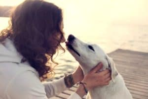 his-owner-dog-licks-gently-loving-tricks to teach your dog-ss