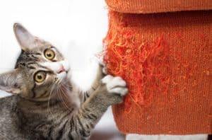 kitten-scratching-orange-fabric-sofa-cat behavioral problems-ss
