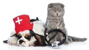 kitten-stethoscope-on-his-neck-cocker-Feed Picky Pets-ss