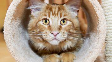 7 Essential Cat Grooming Tools