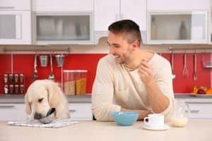 man-dog-enjoying-breakfast-kitchen-dogs coats-ss