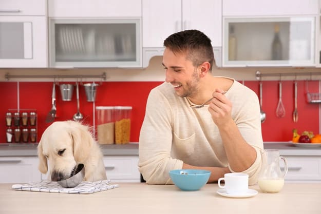 Feed With Nutritious Food   How to Keep Your Dog's Coats Healthy?