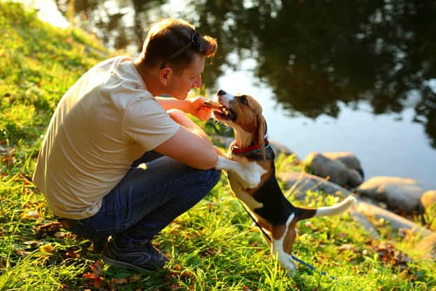 Won?t It Pass Through? | First Aid For Choking Pets | Pet Care and Wellness