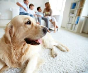 portrait-cute-pet-lying-on-floor-clicker training for dogs-ss
