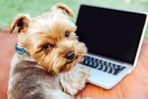 portrait-yorkshire-terrier-dog-front-laptop-pet care and wellness 2018-ss